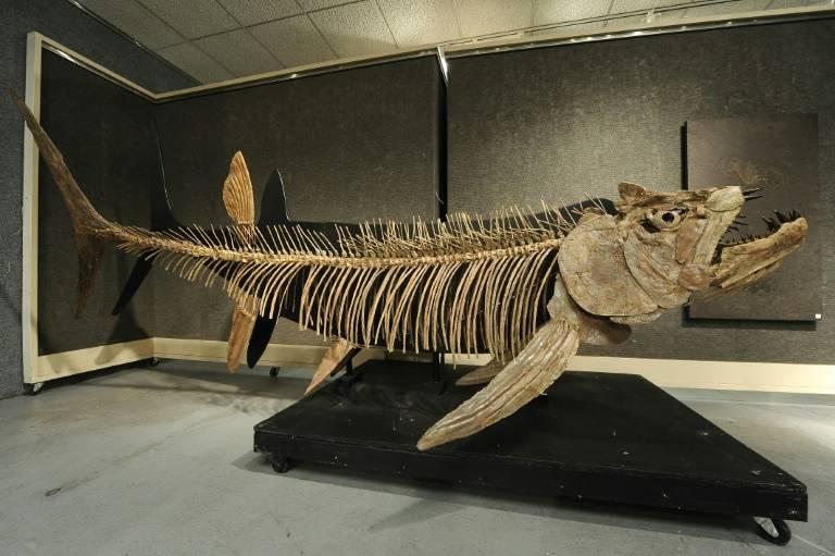 阿根廷发现7000万年前巨型鱼类化石,长6米多,牙齿锋利如针