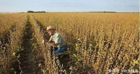 看到巴西后,美国立即签署无病毒证明,已向我国出口1577万吨大豆 ...